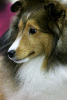 SHELTIES - ALL